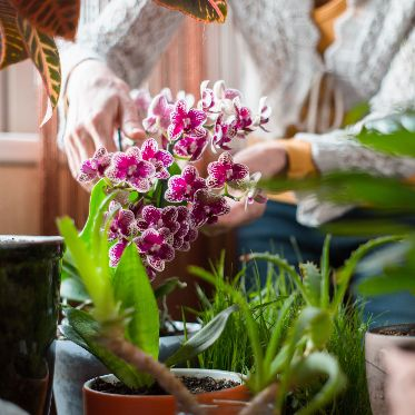 care for orchids
